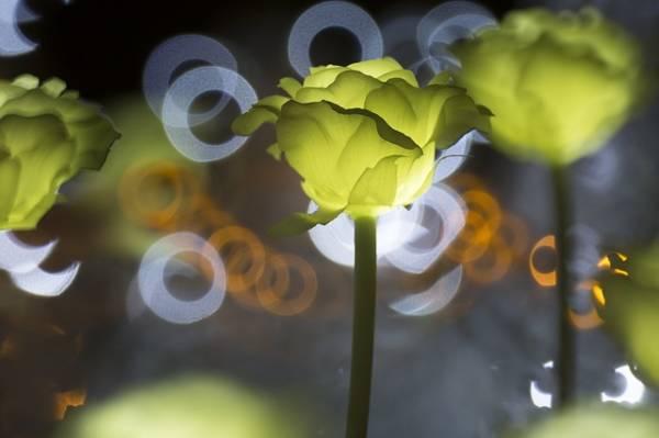 תאורת לד לגינה