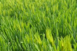איך מנקים דשא סינטטי?