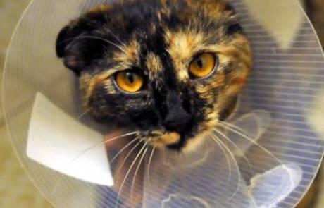 מרפאה וטרינרית, פתח תקווה היא המקום שבו מטפלים בבעלי חיים