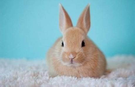 כלוב לארנבים – מומלץ שיהיה בגודל סביר
