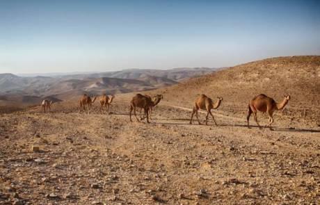 סיורים מודרכים במדבר – יתרונות מול סיור ללא הדרכה