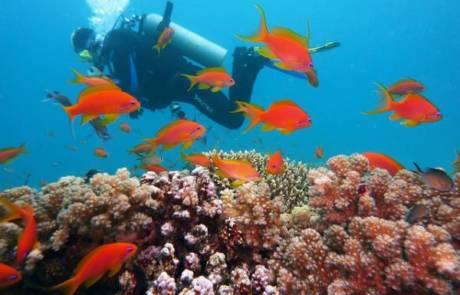 יתרונות של לימודי צלילה באילת