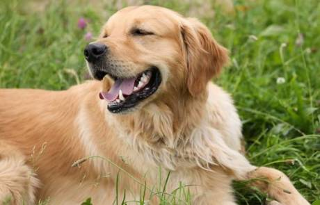 3 סיבות לעבור טיפול בעזרת כלבים