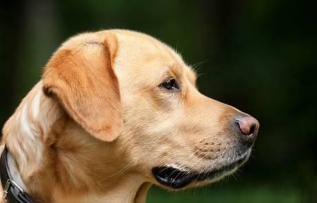 האם המזון של הכלב שלך עושה אותו חולה