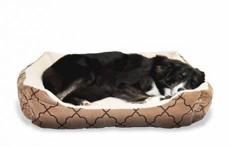 מיטות לכלבים – מדוע זה משתלם?