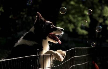 גדר לתיחום ואילוף כלבים, חתולים וארנבים