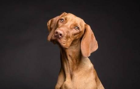 הילס אוכל לכלבים –  מזון איכותי לשמירת איכות החיים ואורח חייו של הכלב שלכם