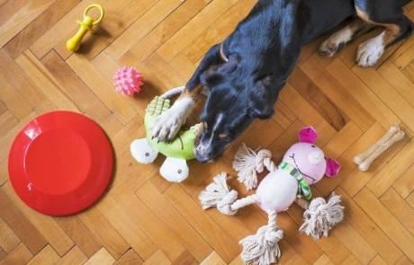 5 צעצועים לכלבים שאתם חייבים לנסות