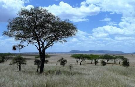 כמה זמן מראש להזמין טיול מאורגן לטנזניה בפסח?