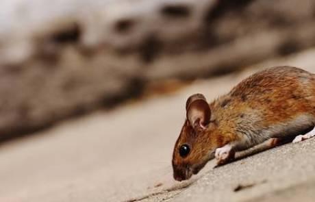 מתי נצטרך לוכד עכברים?