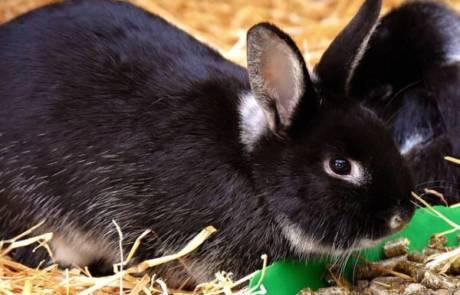 וטרינר לארנבים בדרום – אל תזניחו את הארנב שלכם
