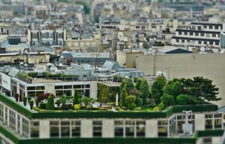 עיצוב גינות גג – במה זה שונה מגינת קרקע?