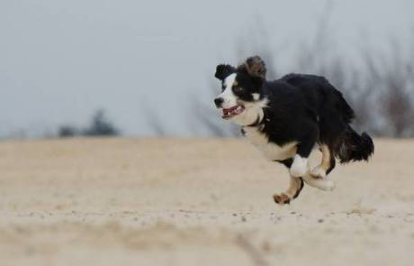 פריקת אנרגיה לכלב