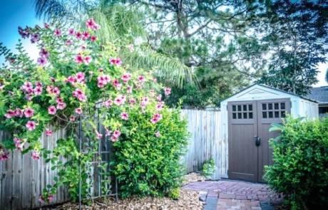 דשנים לגינה ההידרופונית שלך
