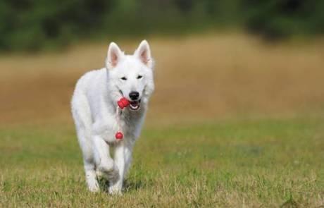 למה לשים לב כשבוחרים אילוף כלבים מקצועי?